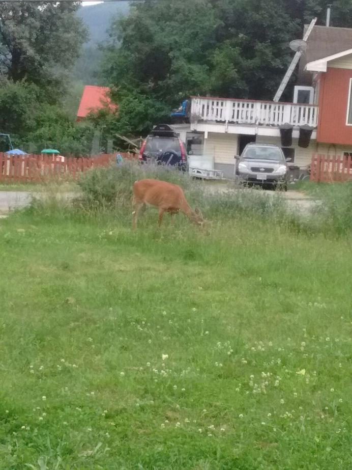 2 Day Kootenays Trip-deer.jpg
